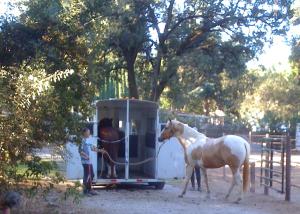Rowdy trailer loading