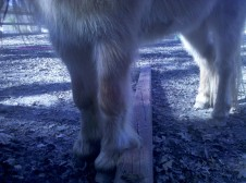 Cutest pony feet straddling a pole