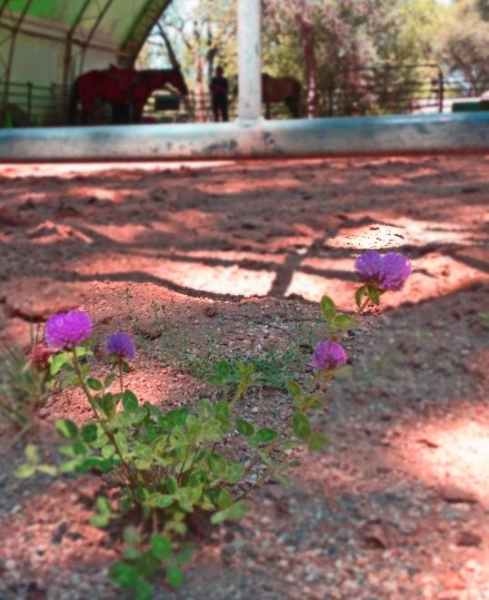 Lesson Flower