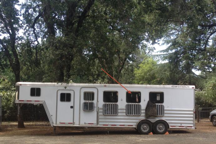 rocky-in-trailer
