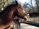 Horses_andotherpics 016